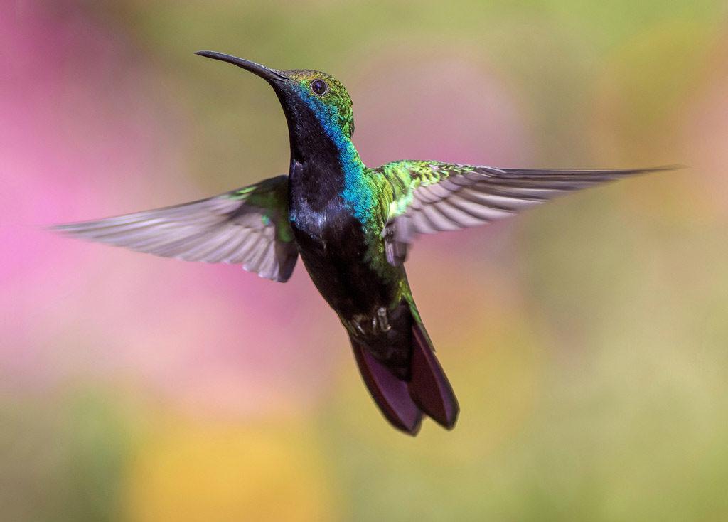 Foto eines fliegenden Vogels